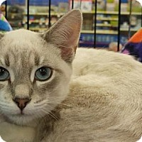 Adopt A Pet :: ARRIETA - Powder Springs, GA