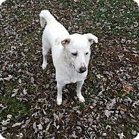 Adopt A Pet :: Caspter - Melbourne, AR