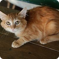 Adopt A Pet :: Larry - San Antonio, TX