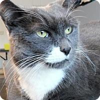 Adopt A Pet :: Misty - Waupaca, WI