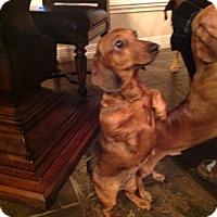 Adopt A Pet :: Pebbles - Pearland, TX