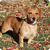 Adopt A Pet :: Endie - San Jose, CA
