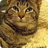 Adopt A Pet :: Rocky - Monroe, GA