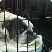 Adopt A Pet :: Winnie - Winder, GA