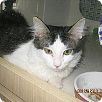 Adopt A Pet :: Dennis - West Dundee, IL
