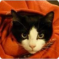 Adopt A Pet :: Ash - Fredericton, NB