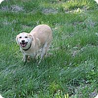 Adopt A Pet :: Joyce - Poughkeepsie, NY