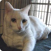 Adopt A Pet :: Dempzey - Colmar, PA
