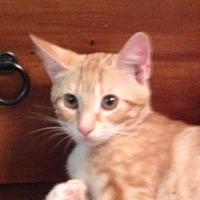 Adopt A Pet :: Logan - Slidell, LA