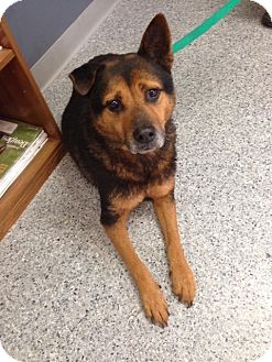 Shepherd (Unknown Type) Dog for adoption in Jackson, Mississippi - Tommy