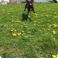 Adopt A Pet :: Gerta - Delaware, OH