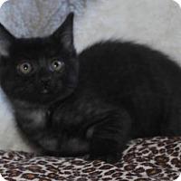 Adopt A Pet :: Mimi - Hamilton, ON