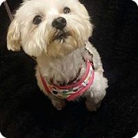 Adopt A Pet :: SOPHIA - San Dimas, CA