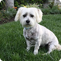 Adopt A Pet :: RYKER - Newport Beach, CA