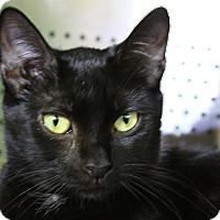 Adopt A Pet :: Marilee - Sarasota, FL