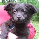 Adopt A Pet :: Mowgli