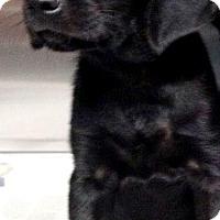 Adopt A Pet :: Mario - Barnegat, NJ