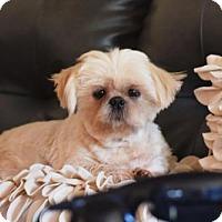 Adopt A Pet :: Teddy - Springfield, VA