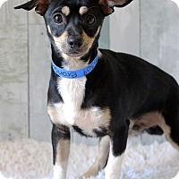 Adopt A Pet :: Bronson - Waldorf, MD