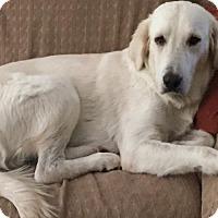 Adopt A Pet :: Hailey - Garland, TX
