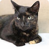 Adopt A Pet :: Kamilla - STRAY - Midland, MI