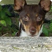 Adopt A Pet :: Roadie - of, NJ