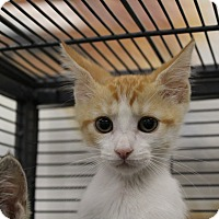 Adopt A Pet :: Harvey - Sarasota, FL