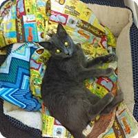 Adopt A Pet :: Gizmo - Lakeland, FL