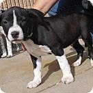 Adopt A Pet :: Baby Jaden-Adoption Pending