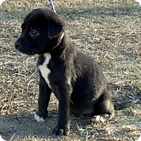 Adopt A Pet :: LULU/ADOPTED - Waterbury, CT