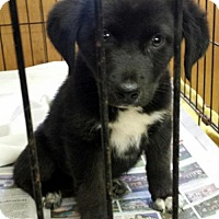 Adopt A Pet :: Bud - Livingston, TX