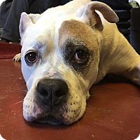 Adopt A Pet :: Pirate - Frankfort, IL