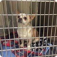 Adopt A Pet :: Jackson - Aurora, IL