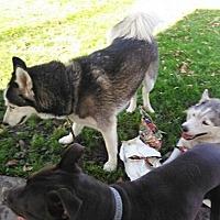 Adopt A Pet :: Tipton - Alhambra, CA