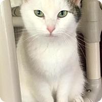 Adopt A Pet :: Annabel - Menifee, CA