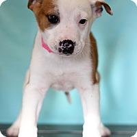 Adopt A Pet :: Jannie - Waldorf, MD