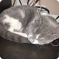 Adopt A Pet :: Jackie - Fowlerville, MI