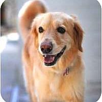 Adopt A Pet :: Alexa - Scottsdale, AZ