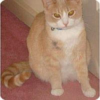 Adopt A Pet :: Buster - Spotsylvania, VA