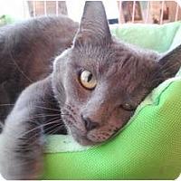 Adopt A Pet :: Taddi (LF) - Little Falls, NJ