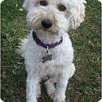 Adopt A Pet :: Winston the Wonderful - La Costa, CA