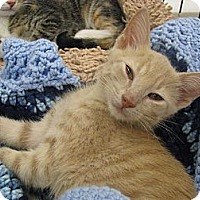 Adopt A Pet :: Mikey - Vero Beach, FL