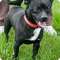 Adopt A Pet :: Olie - Lake Odessa, MI