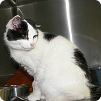 Adopt A Pet :: Bamboo - Dover, OH