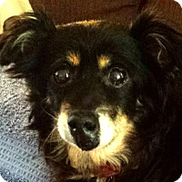 Adopt A Pet :: Mietta - Decatur, GA