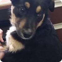 Adopt A Pet :: Devon - Avon, NY
