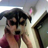 Adopt A Pet :: A268713 - Conroe, TX