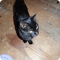 Adopt A Pet :: Nora - Colbert, GA
