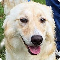 Adopt A Pet :: Viola - BIRMINGHAM, AL