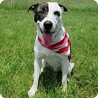 Adopt A Pet :: DAWSON - New Cumberland, WV